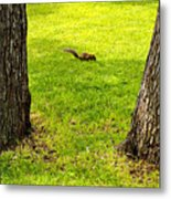 Two Trees And A Squirrel Metal Print