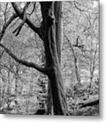 Two Trees In Spring - Mono Metal Print