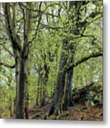 Two Trees In Springtime Metal Print