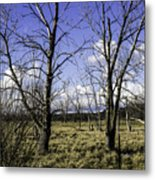 Two Trees Of Blue Metal Print