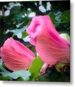 Two Unopen Pink Hibiscus Flowers Metal Print