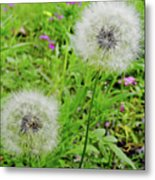 Two Wishes Metal Print