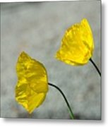 Two Yellow Blossoms Metal Print