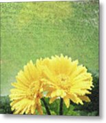 Two Yellow Gerber Daisies Metal Print