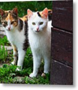 Two Young Cats Metal Print