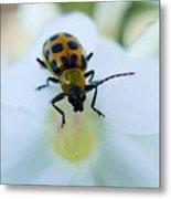 Beauty And The Bug Metal Print
