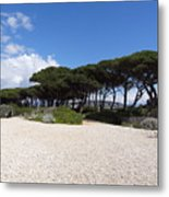 Umbrella Pine, Lerins Island Metal Print