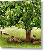 Umbrella Tree Metal Print