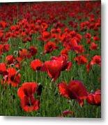Umbria  Poppies 3 Metal Print