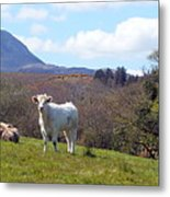 Under Muckish ,donegal  Metal Print