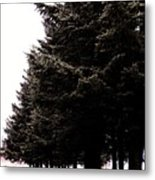 Under The Blue Spruce Metal Print