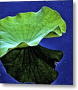 Under The Lily Pad Metal Print
