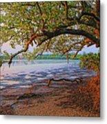 Under The Mangroves Metal Print