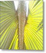 Under The Palm II Gp Metal Print