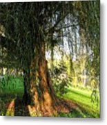 Under The Weeping Willow Metal Print