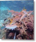 Under Water Fiji Metal Print