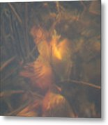 Under Waterlily Metal Print