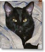 Undercover Kitten Metal Print