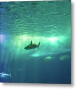 Undersea Scene Background Metal Print