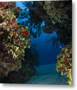 Underwater Crevice Through A Coral Metal Print