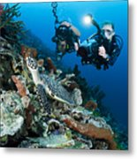 Underwater Photography Metal Print by Dave Fleetham - Printscapes