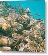Underwater Photography Metal Print