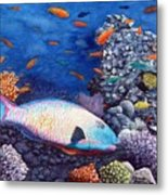 Underwater Treasures Metal Print