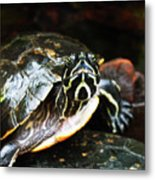 Underwater Turtle Metal Print