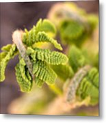 Unfolding Fern Leaf Metal Print