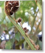 Unfurling Metal Print