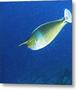 Unicorn Fish 2 Metal Print