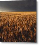 United States, Kansas, Summer Thunder Metal Print