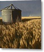United States, Kansas Wheat Field Metal Print