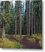University Of Alaska Fairbanks Trail System Metal Print