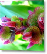 Unknown Flower Seeds Metal Print
