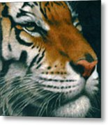 Untitled Tiger Metal Print