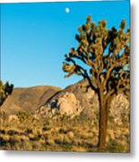 Untouched Joshua Tree National Park Metal Print