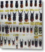Unusual Pattern Made Out Of Many Stag Beetles Of Different Sizes Metal Print