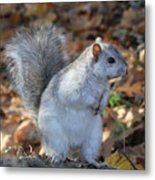 Unusual White And Gray Squirrel Metal Print