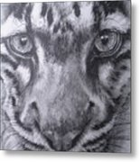 Up Close Clouded Leopard Metal Print