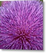 Up Close On Musk Thistle Bloom Metal Print