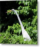 Up In The Tree Metal Print