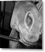 Up The Nose Metal Print
