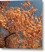 Up To The Cherry Flowers Metal Print