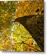 Up To The Top Metal Print