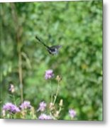 Up, Up And Away-black Swallowtail Butterfly Metal Print