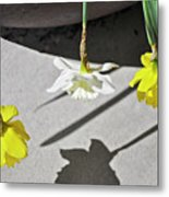 Upside Down Daffodils Metal Print