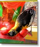 Upside Down Oriole Metal Print