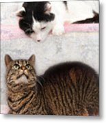 Upstairs Downstairs With Emmy And Pepper Metal Print