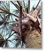 Upward Palm Metal Print